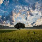 12 frasi motivazionali di Jim Rohn: 7) Assumiti la piena responsabilità del tuo raccolto